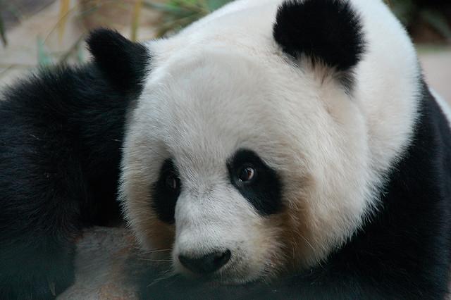 chiang mai zoo, chiang mai, rondreis thailand, thailand rondreizen, bezienswaardigheden chiang mai,