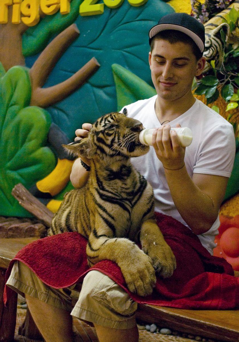tiger zoo pattaya, highlights pattaya, pattaya, thailand rondreizen, rondreis thailand, bezienswaardigheden pattaya,