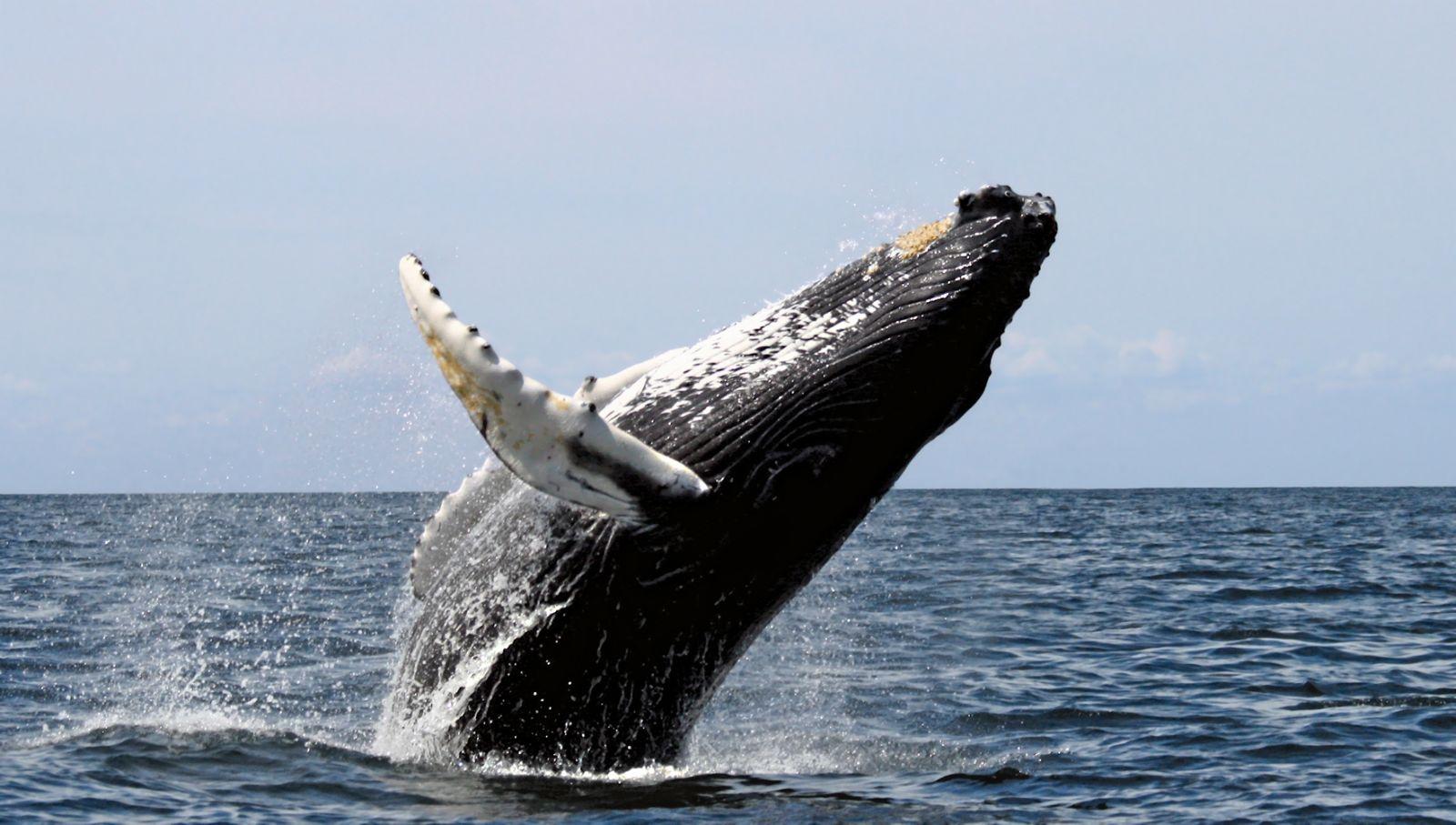 walvisspotten, walvis, walvissen